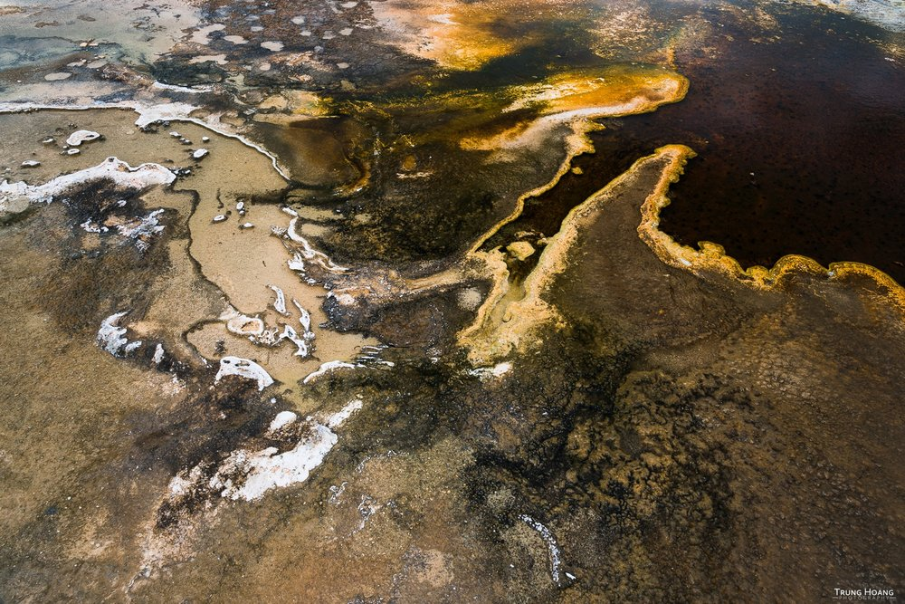 Thermophilic Bacteria of Yellowstone