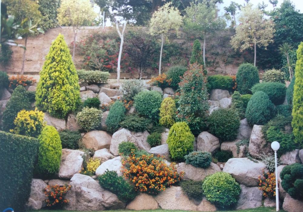 Rocallas jardineria tot verd for Plantas para rocallas