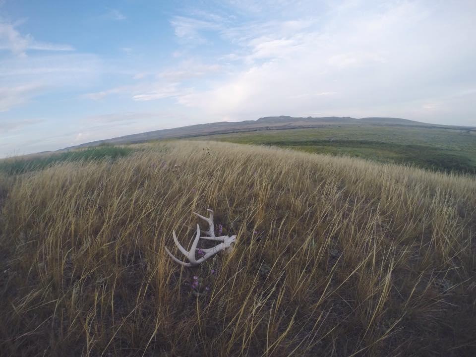 Grasslands4.jpg