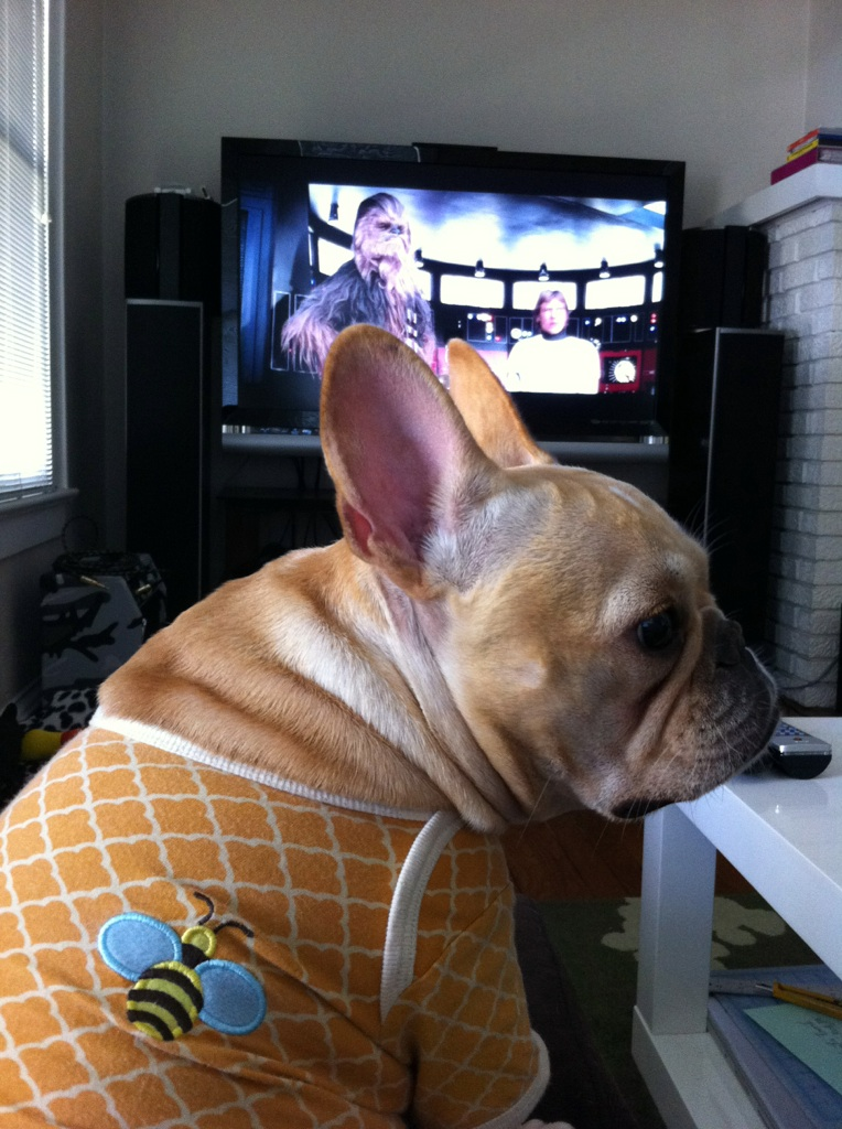 dailymiyuki :     Watching star wars with dad. She thinks it's as interesting as I do (not very).