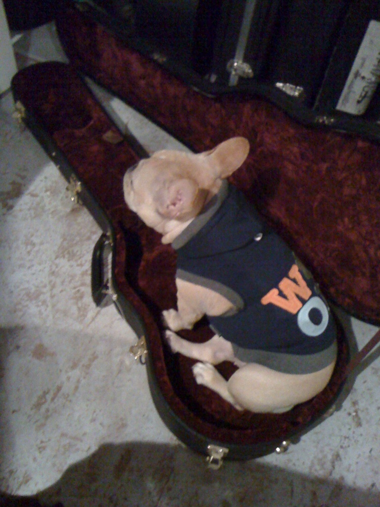 dailymiyuki: Just hanging out in dad's guitar case. Pup