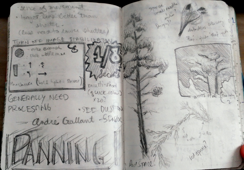 Notes from Andre Gallant's lecture of using Panning in photography.  Also, images of the only white pines I found all week and a spruce I am unfamiliar with.