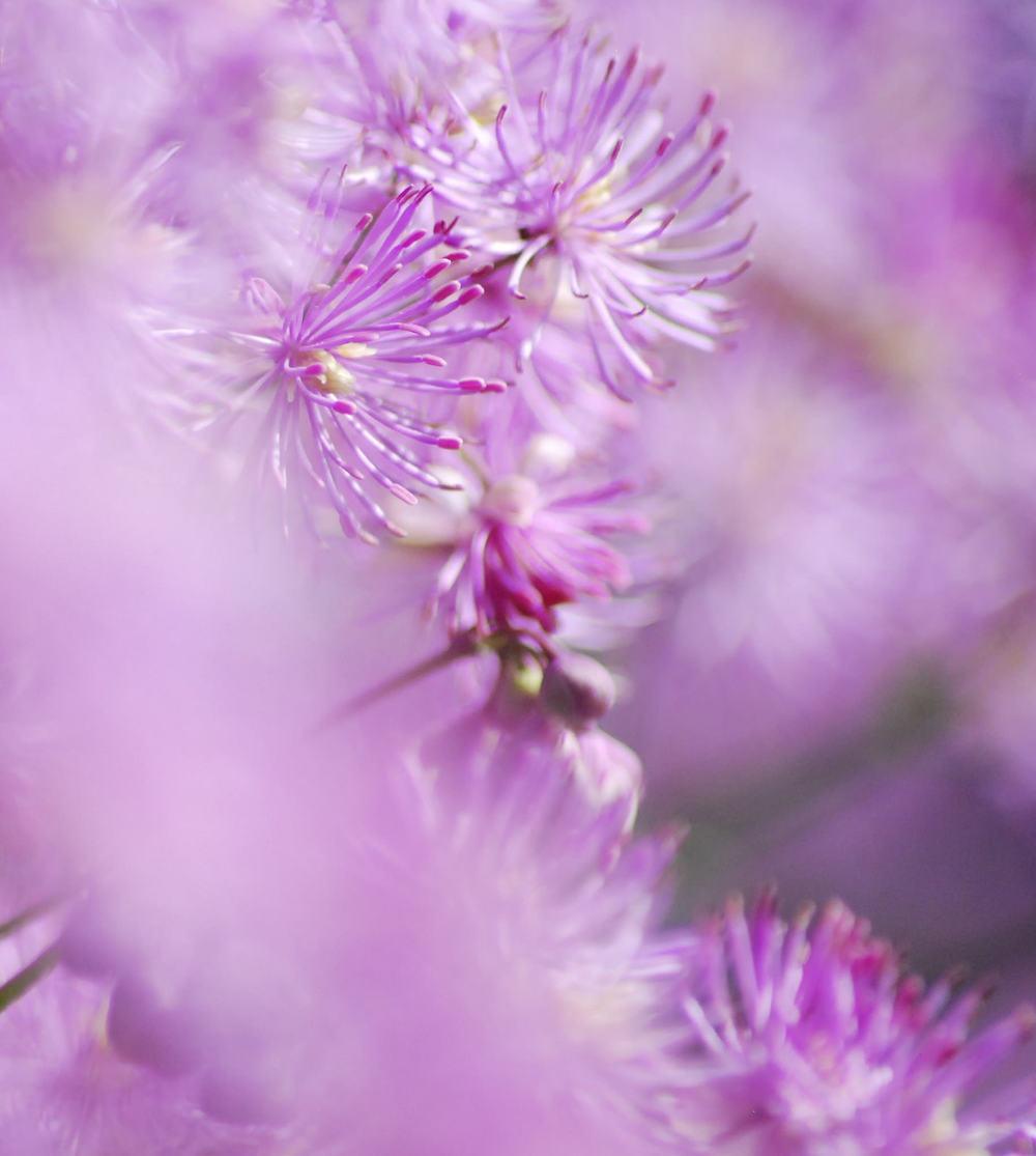 Garden Blooms 1