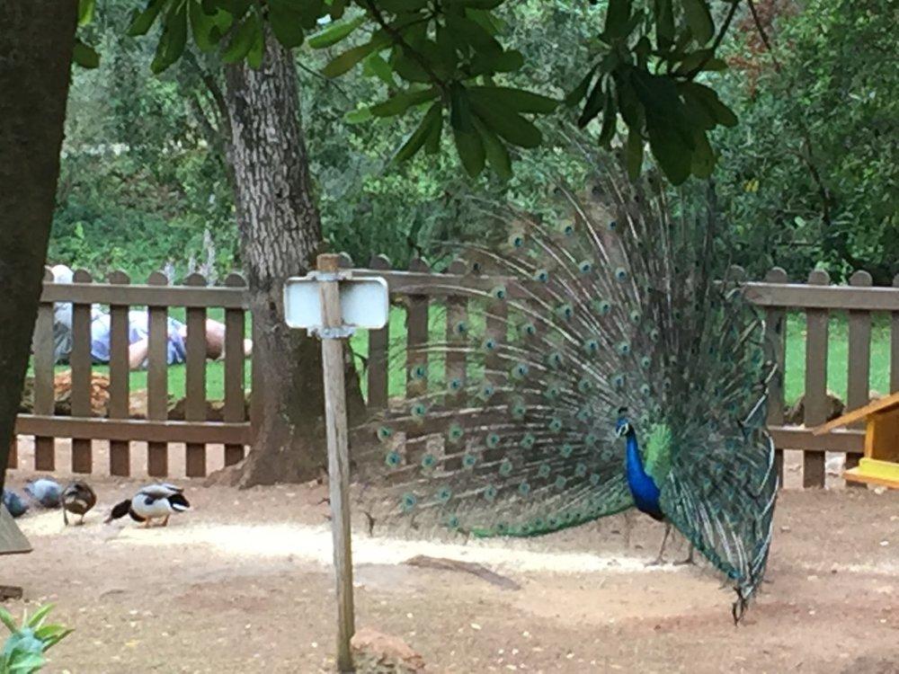 Parque Marechal Carmona