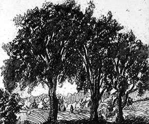 Three Elms
