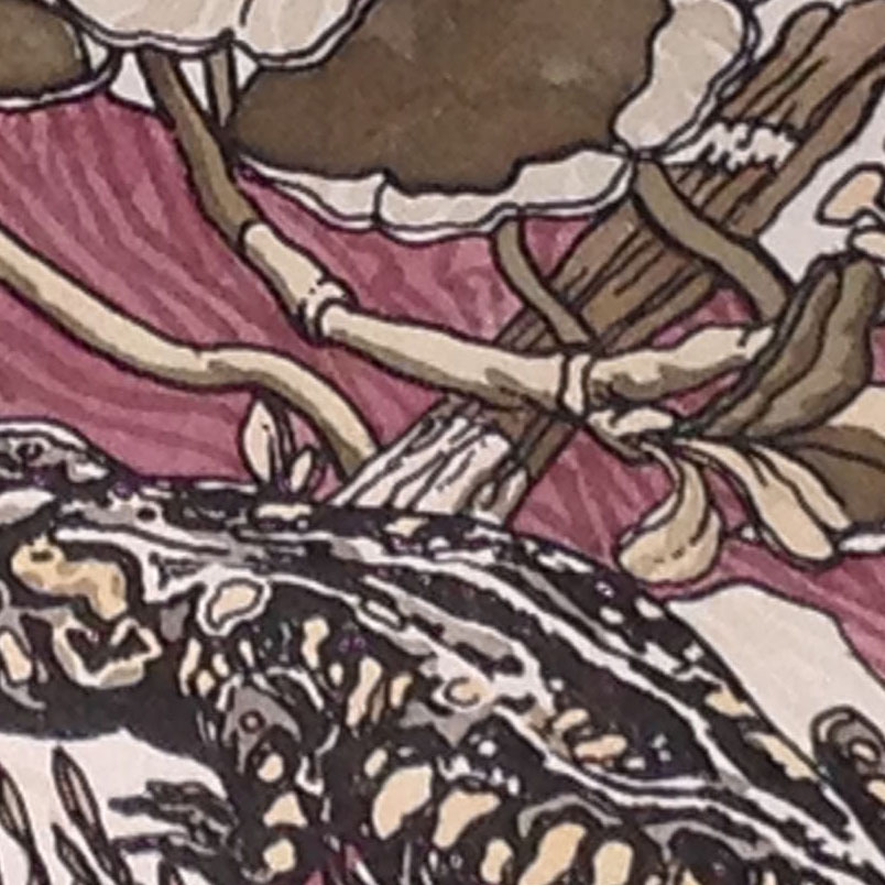 """Detail of the hand-colored """"Spotted Salamander"""" shows some new patterns and forms not seen in the uncolored version of this print."""