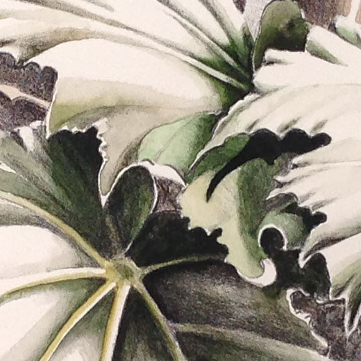 Sondra's control of the watercolor medium is well illustrated in this detail from her print.