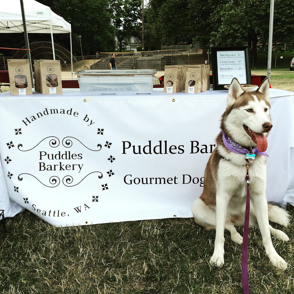 Fancy Dog at Olympic Sculpture Park Raises 7,350 for Seattle Humane's Pet Project