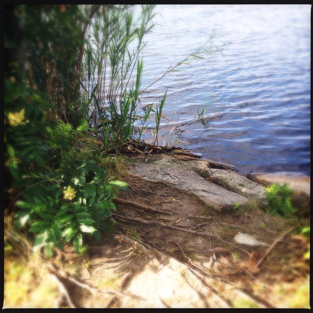 BCC pond 2015