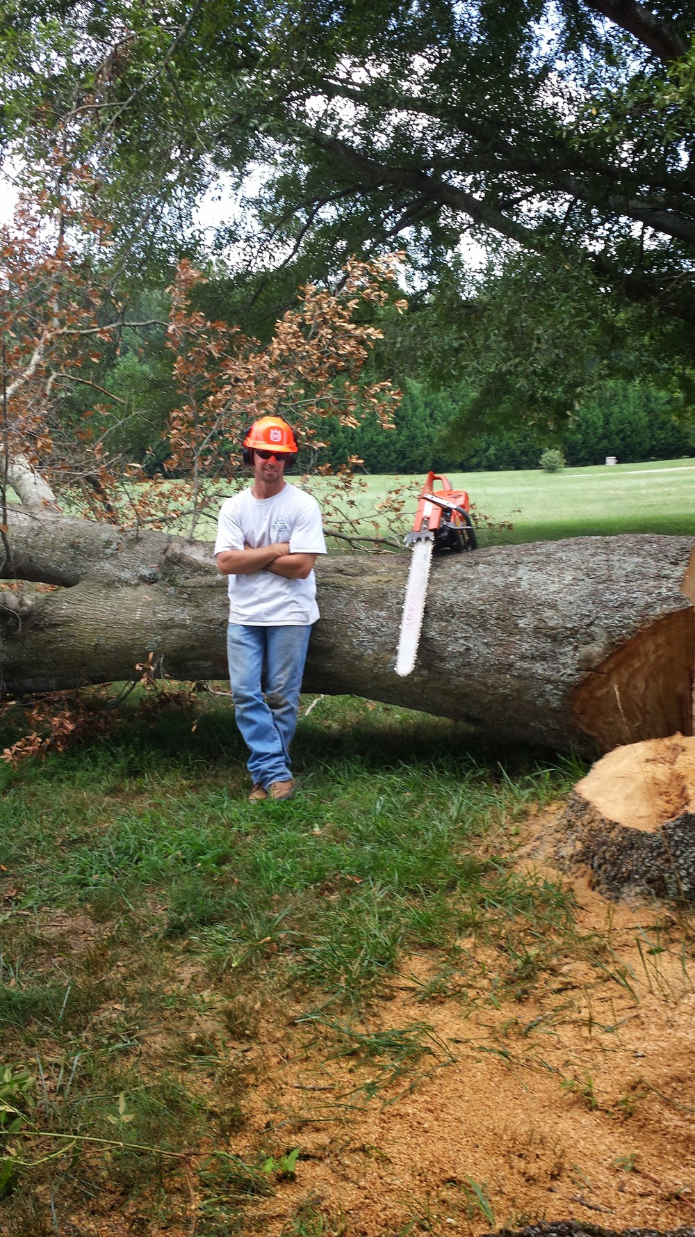 Aaron large tree after.jpg