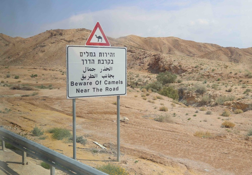 Sign on the road leading up and out of the Dead Sea. Strangely similar to the Snowmobile Crossing signs in Central New York. Unless you're from there, you don't expect them.