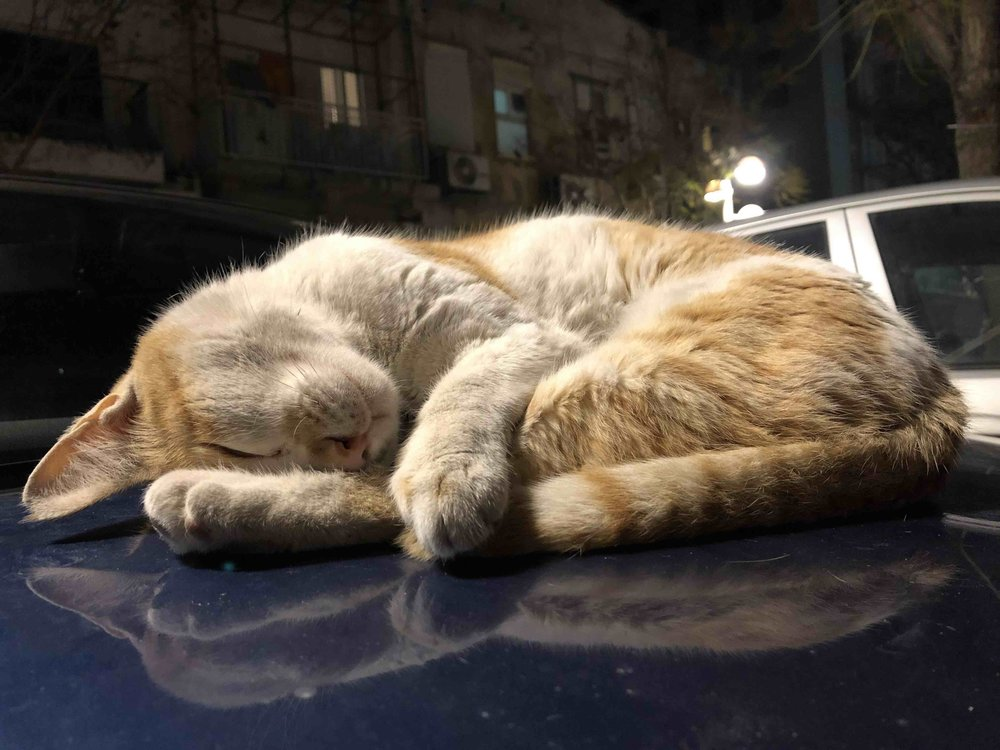 Lots of cats enjoy the relaxed Tel Aviv vibe.