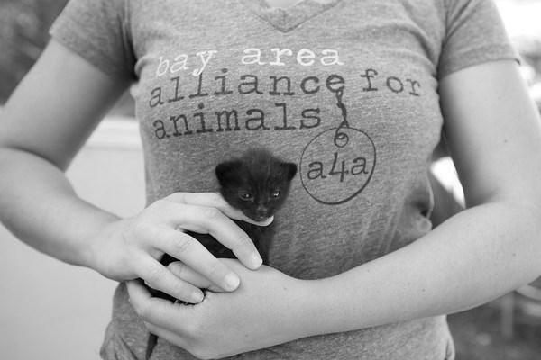 Kitten w tshirt.jpg