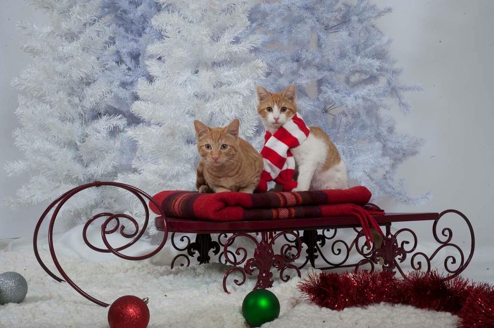 Fred & George