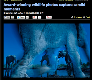http://www.dpreview.com/news/2013/11/09/award-winning-wildlife-photos-capture-candid-moments?utm_source=notification&utm_medium=email&utm_campaign=generic