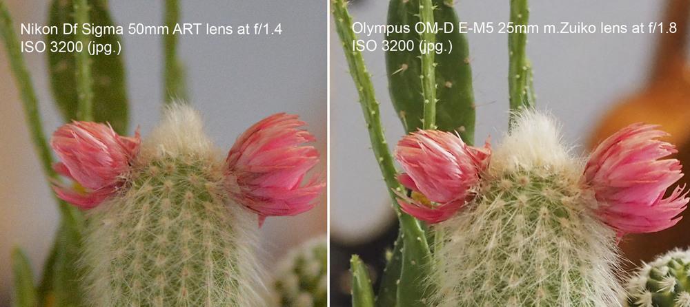 Olympus OM-D E-M10 m.Zuiko 25mm f/1.8 Nikon Df Sigma 50mm f/1.4 ART lens