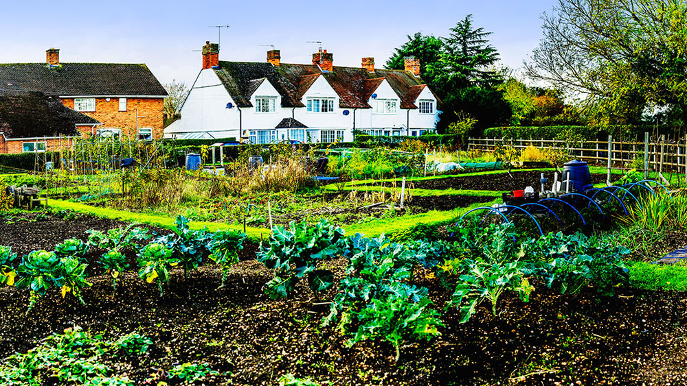 allotment_Panorama1.jpg