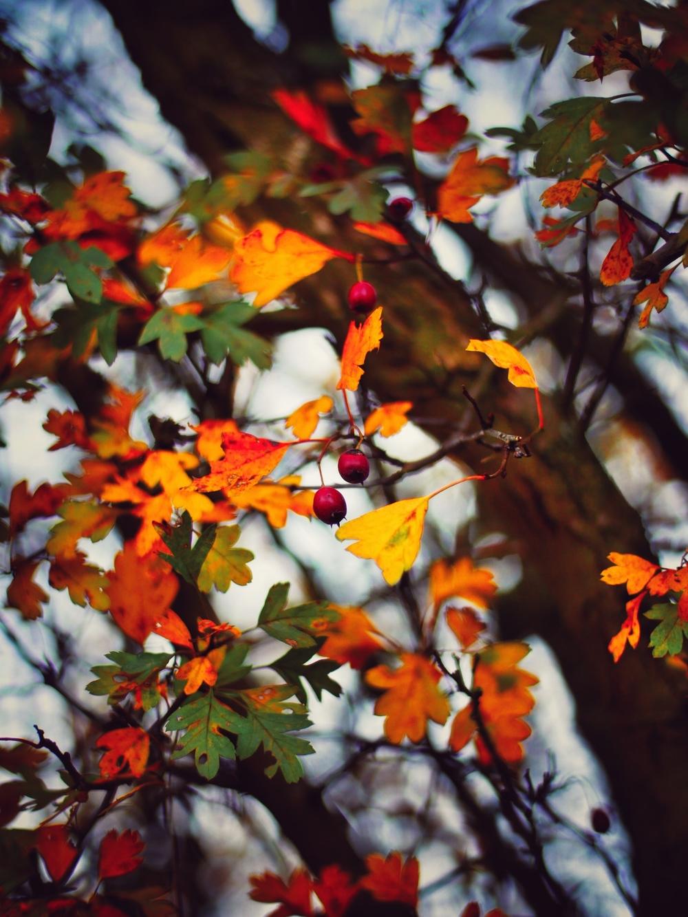 2015-10-23_145135106_898E8_iOS.jpg