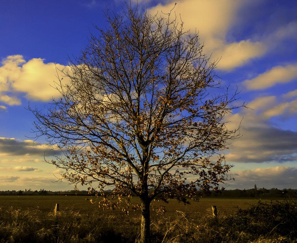 autumn-137.jpg