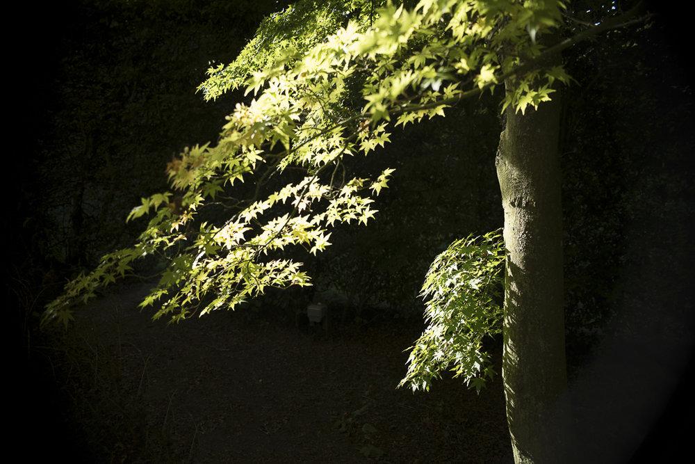autumn-161.jpg