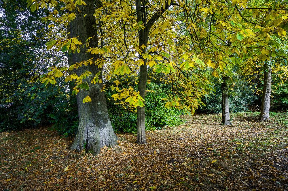 autumn-163.jpg