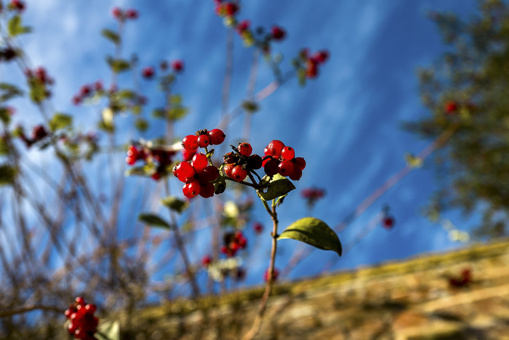 autumn-149.jpg