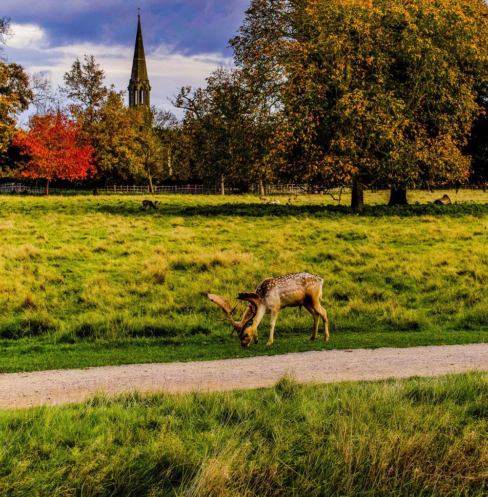 deer park-14.jpg