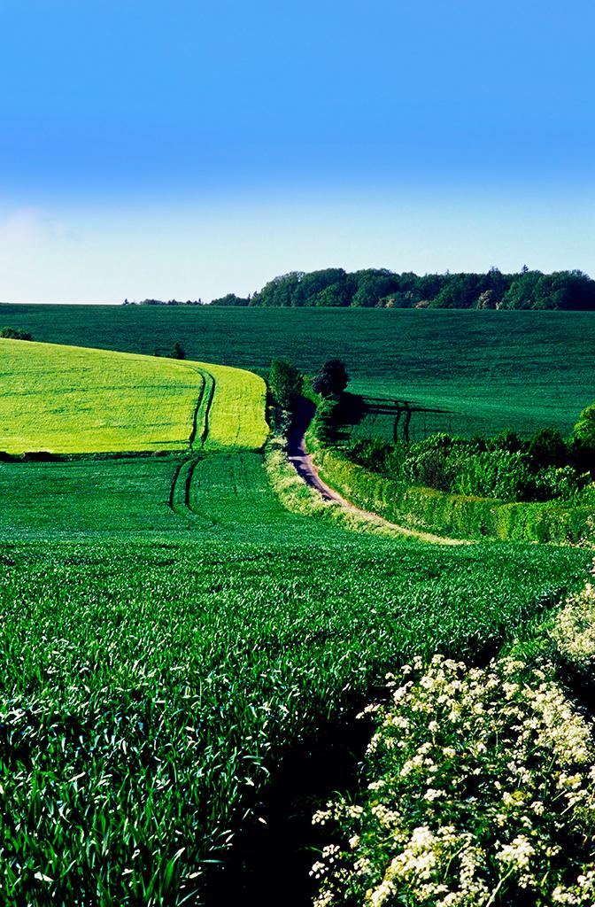 farmland - 005.jpg