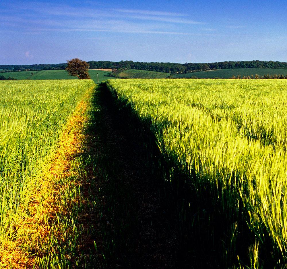 farmland - 012.jpg