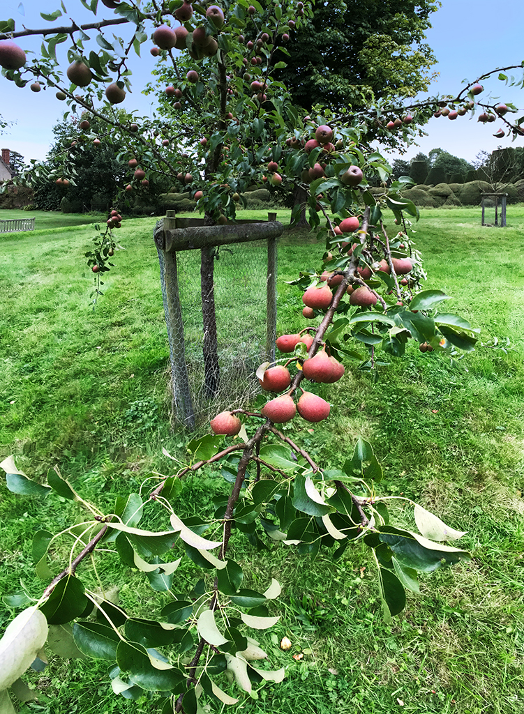 apple-orchard-1.jpg