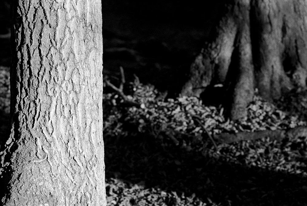 film scans-2693.jpg