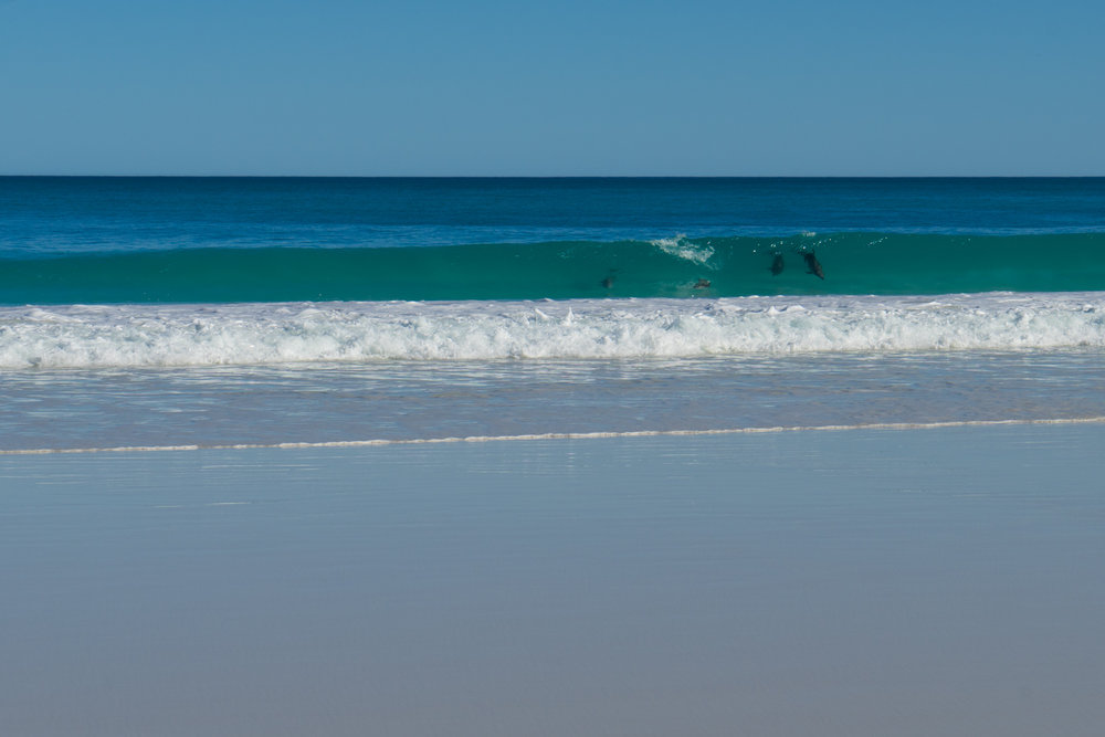 The Great Australian Bight - Twilight Cove