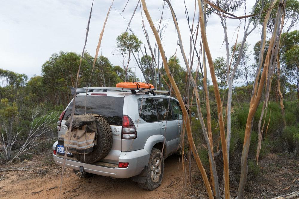 Holland Track, Western Australia - Gum Trees