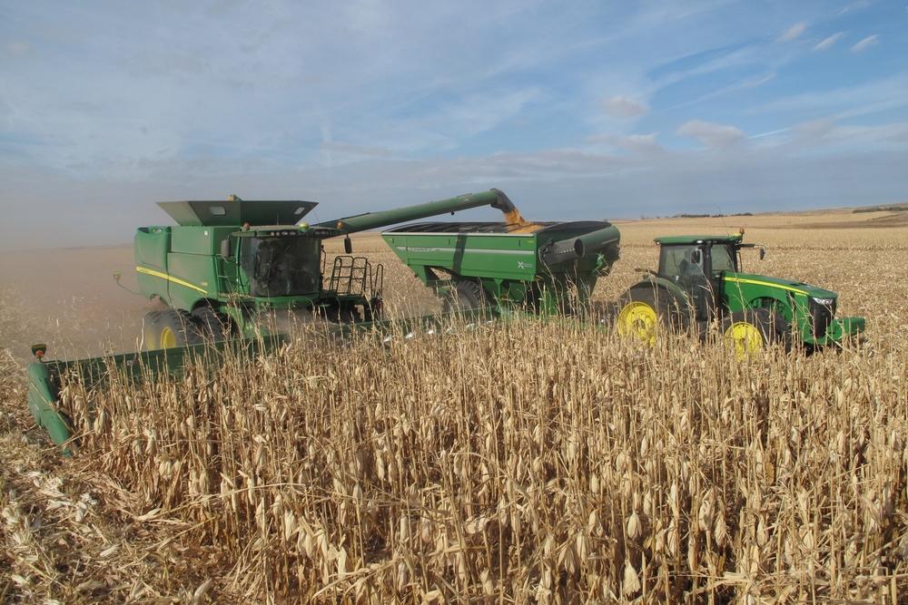 harvesting corn.JPG