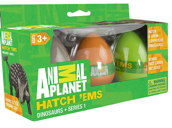 angeliz-guevara-hatchem-eggs-animal-planet