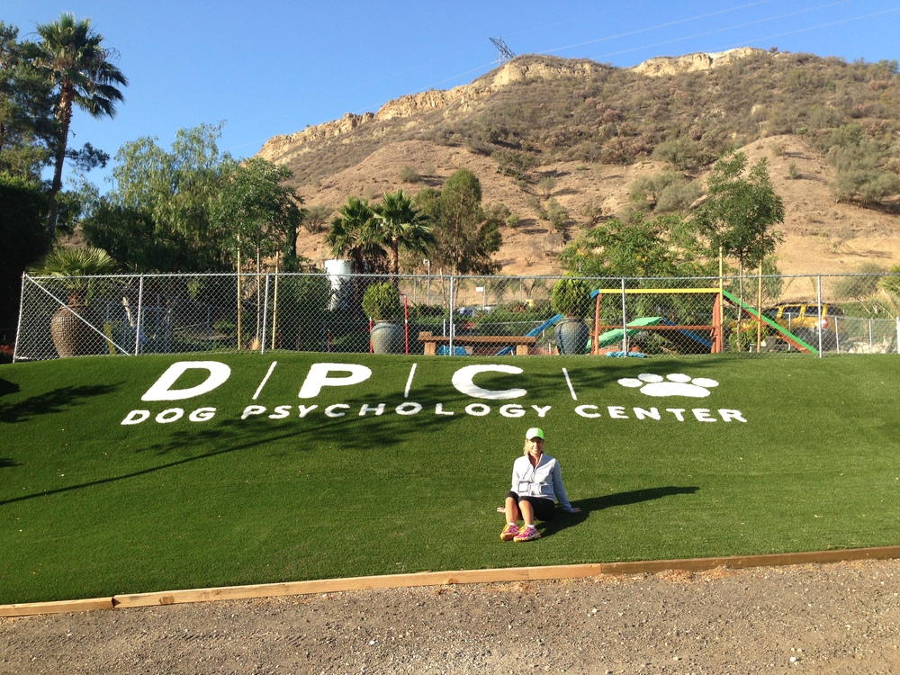 Jo's time at Cesar Millan's DPC (Dog Psychology Centre) just north of LA