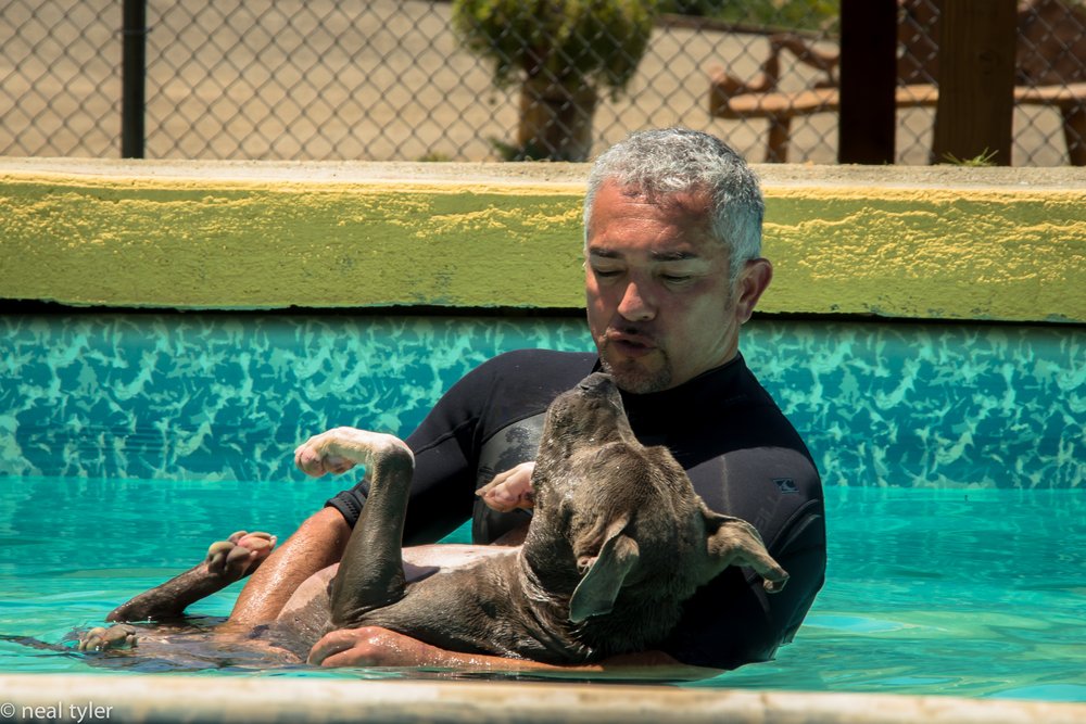 Cesar and Junior, pool therapy