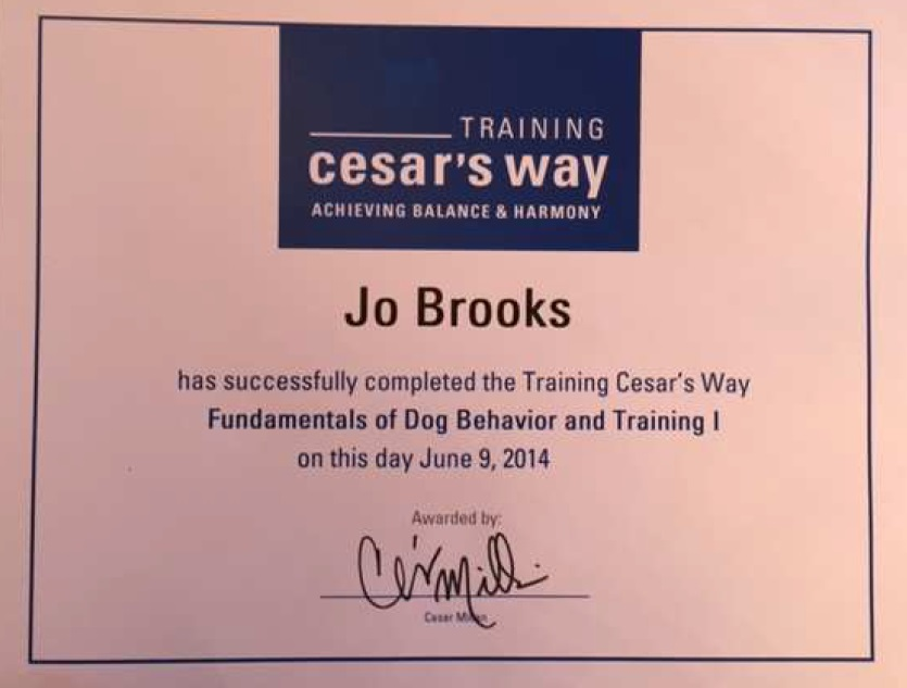 Cesar Millan Certificate