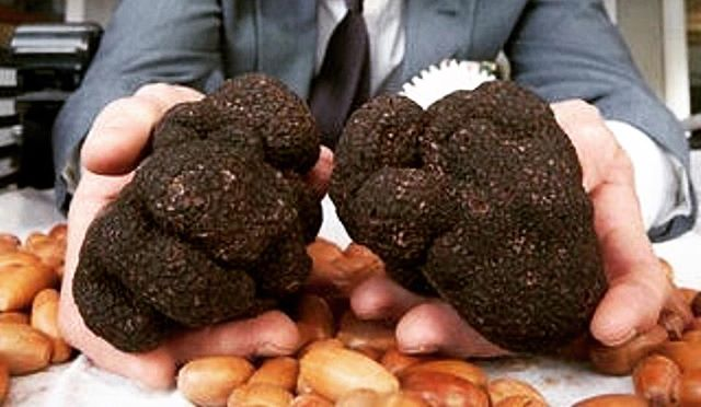 The @trufflemelb festival has finally arrived! Hooray!⠀ ⠀ Find out truffled toastas at @vicmarket today from 10am-3pm.⠀ ⠀ We will also have our standard menu on offer at @hankmarvinmarket and @toastaandco 💕⠀ ⠀ Posta: @trufflemelb