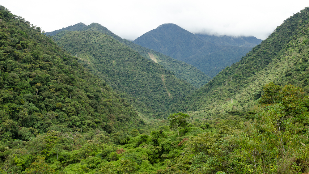 The cloud forests are home to a huge variation in elevation giving a large variation in temperature. As a result there's a huge diversity of plants and animals. In fact, Manu is famed as being the most biodiverse (species rich) place on the planet!