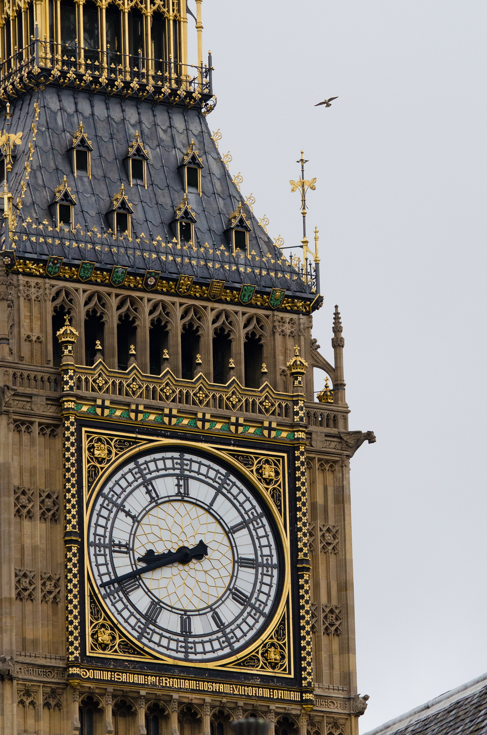 A peregrine falcon flying above Big Ben.