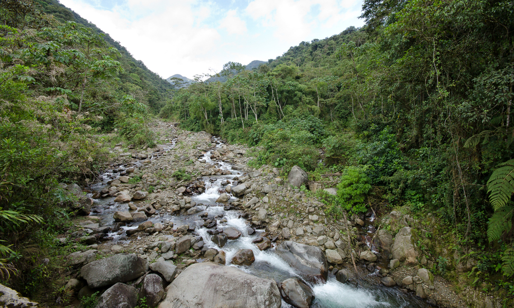 A river high in the cloud forests