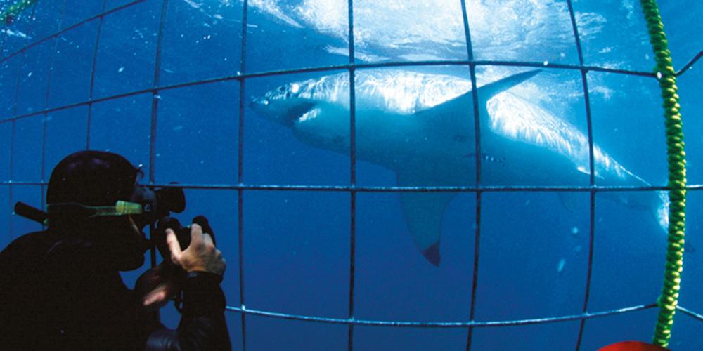 White-Shark-3.jpg