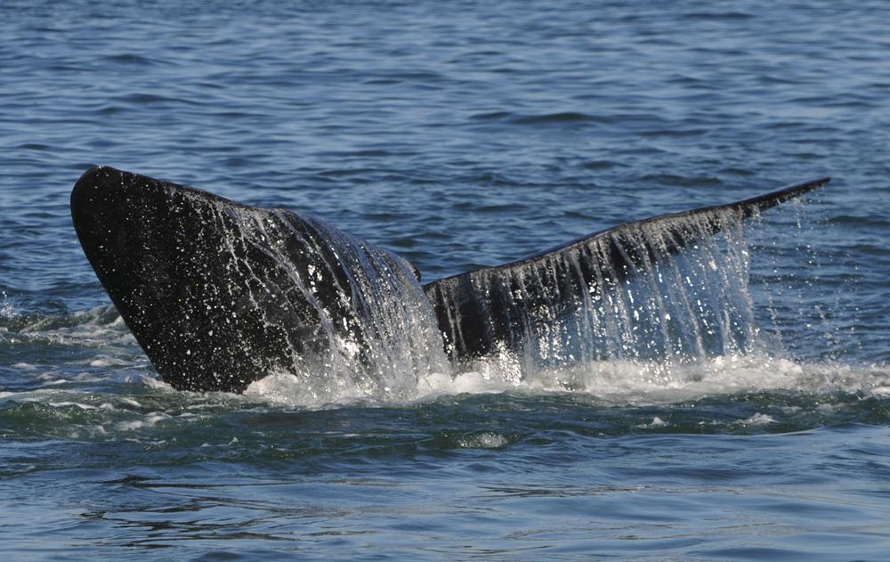 Valaita Hermanuksessa
