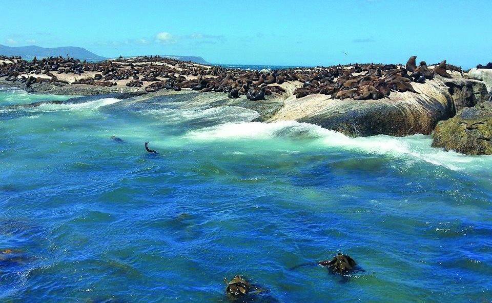 Hout Bayn merijleijonayhdyskuntaa
