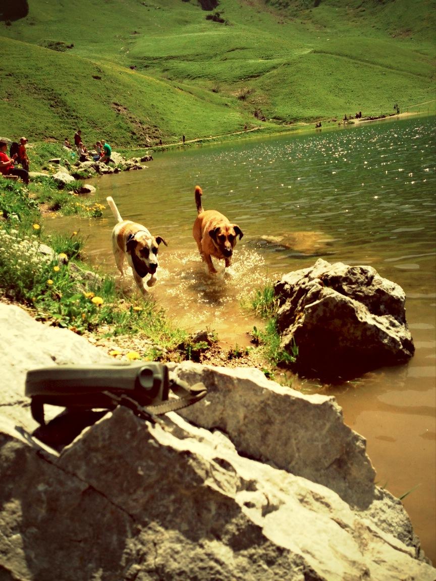 Trainingspartner Bonnie und Clyde kühlen sich im Stockhornseeli ab.