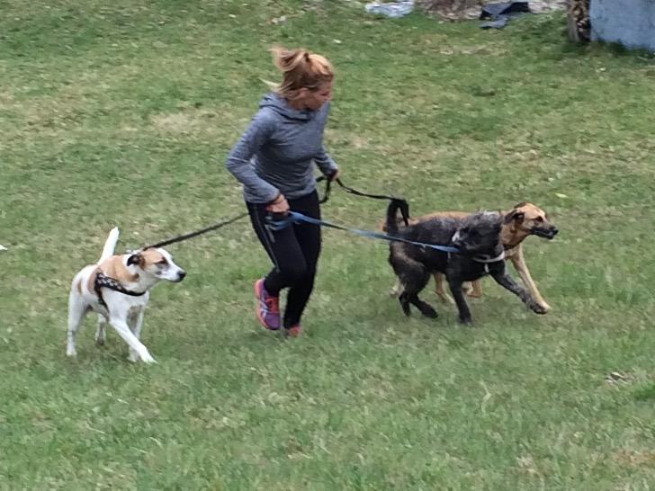 Brigitte mit ihren Trainingspartnern Bonnie, Clyde und Struppi