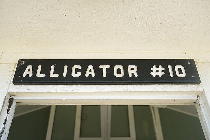 alligator #10 is where he will be making his new home this week...sniff sniff.