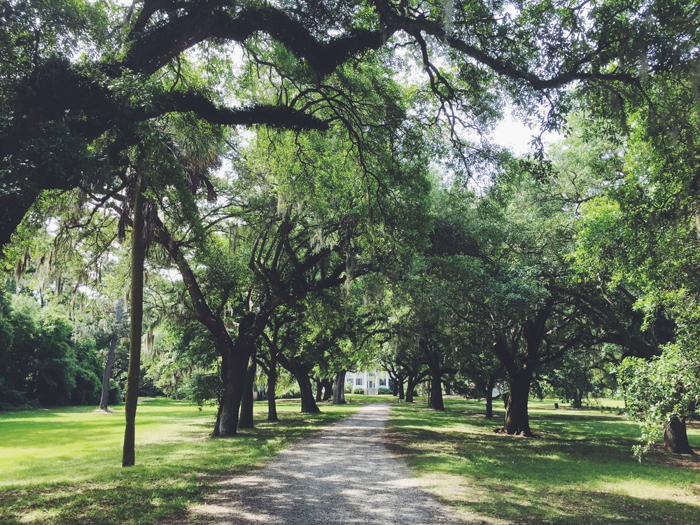 The well-worn, tree-lined path of McLeod Plantation.