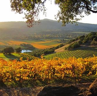 Wine_MountainTop copy.jpg